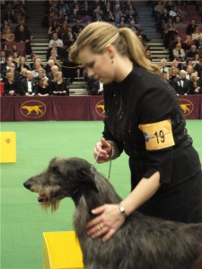 Angela Lloyd and Hickory during the 2011 Westminster Dog Show Finals, in which Hickory won Best in Show.