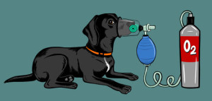 Emma Zen Foundation - donates pet oxygen masks to fire departments and disaster relief programs.