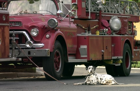 national fire dog day