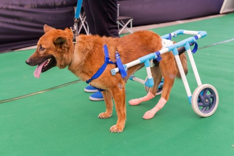 specially abled pet