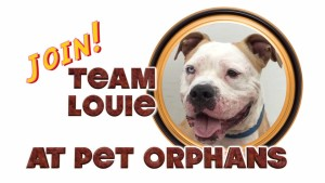 Positively Woof's film about Pet Orphans highlights Louie's transformation