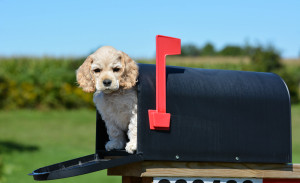 Positively Woof Newsletter Signup