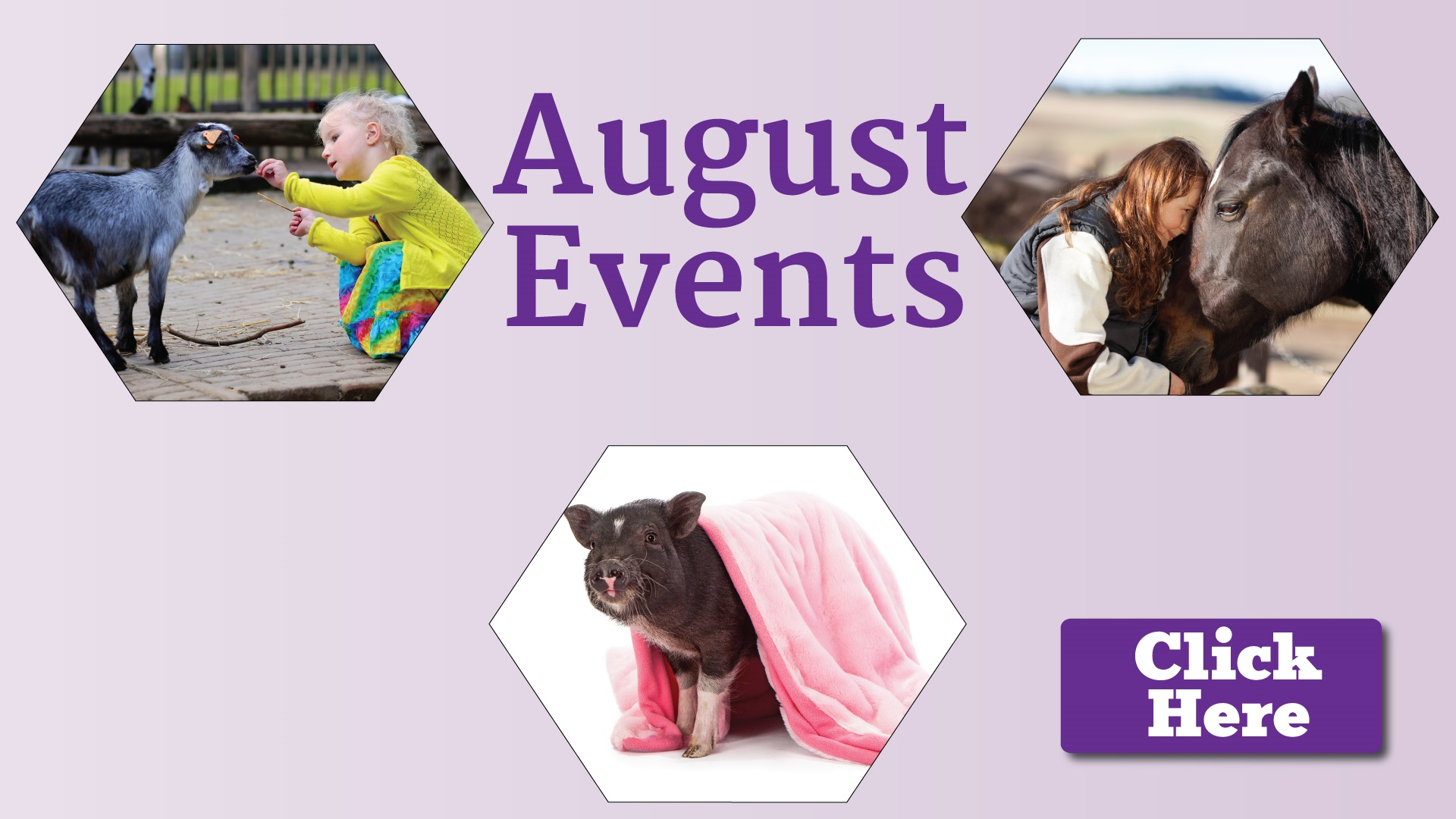 August pet calendar at a glance