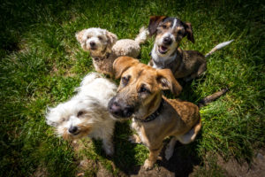 shelter-dogs-playing-positively-woof