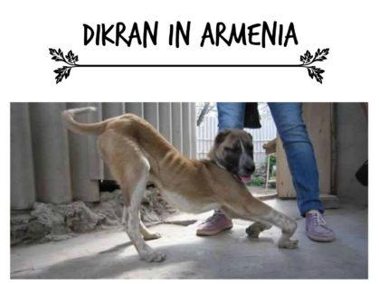 Dikran in Armenia 2