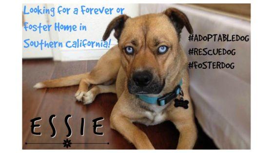 Essie Featured 2