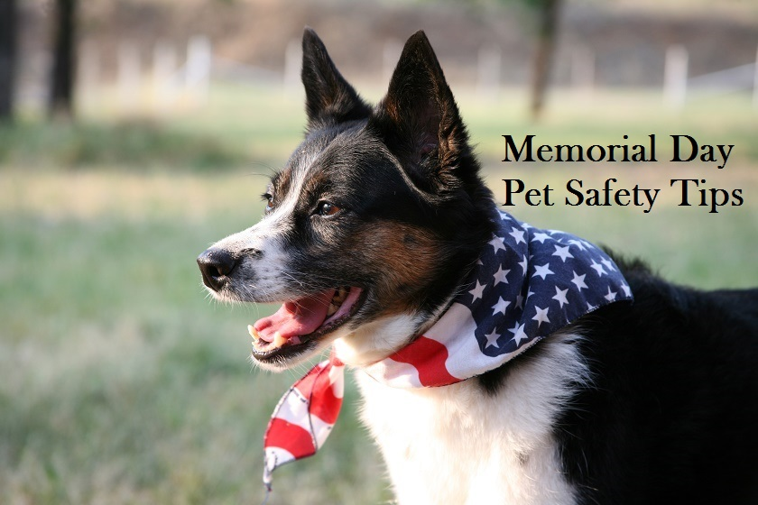 memorial day pet safety