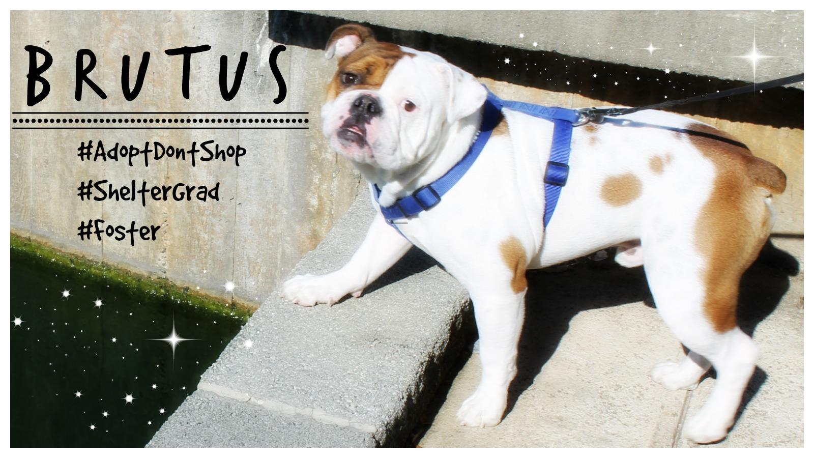 Brutus Featured