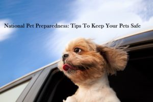 national pet preparedness