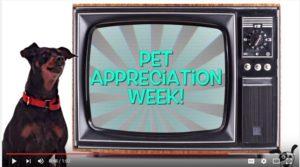 pet appreciation