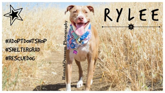 Rylee Featured