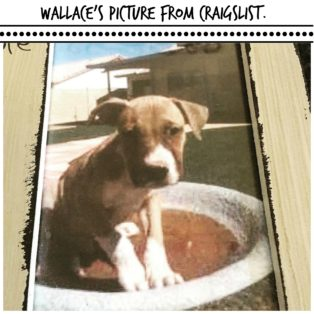 Wallace - Craigslist