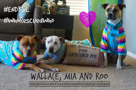 Wallace, Mia and Roo