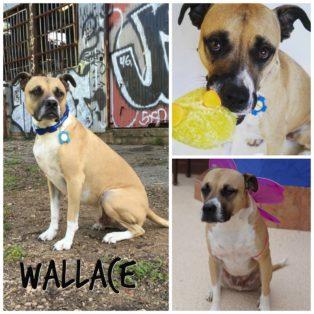 Wallace Trio