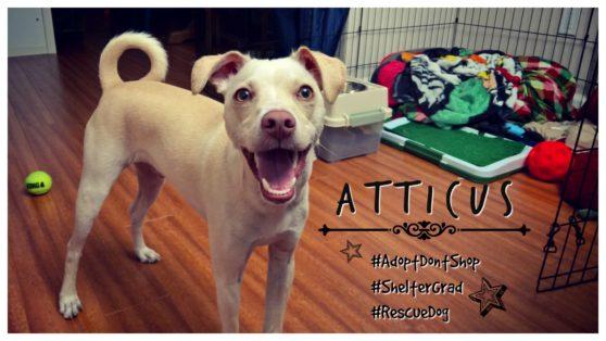 Atticus Featured
