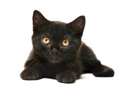 Black cat appreciation day