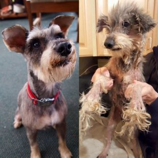 Felix and Ruby - Ruby Before and After