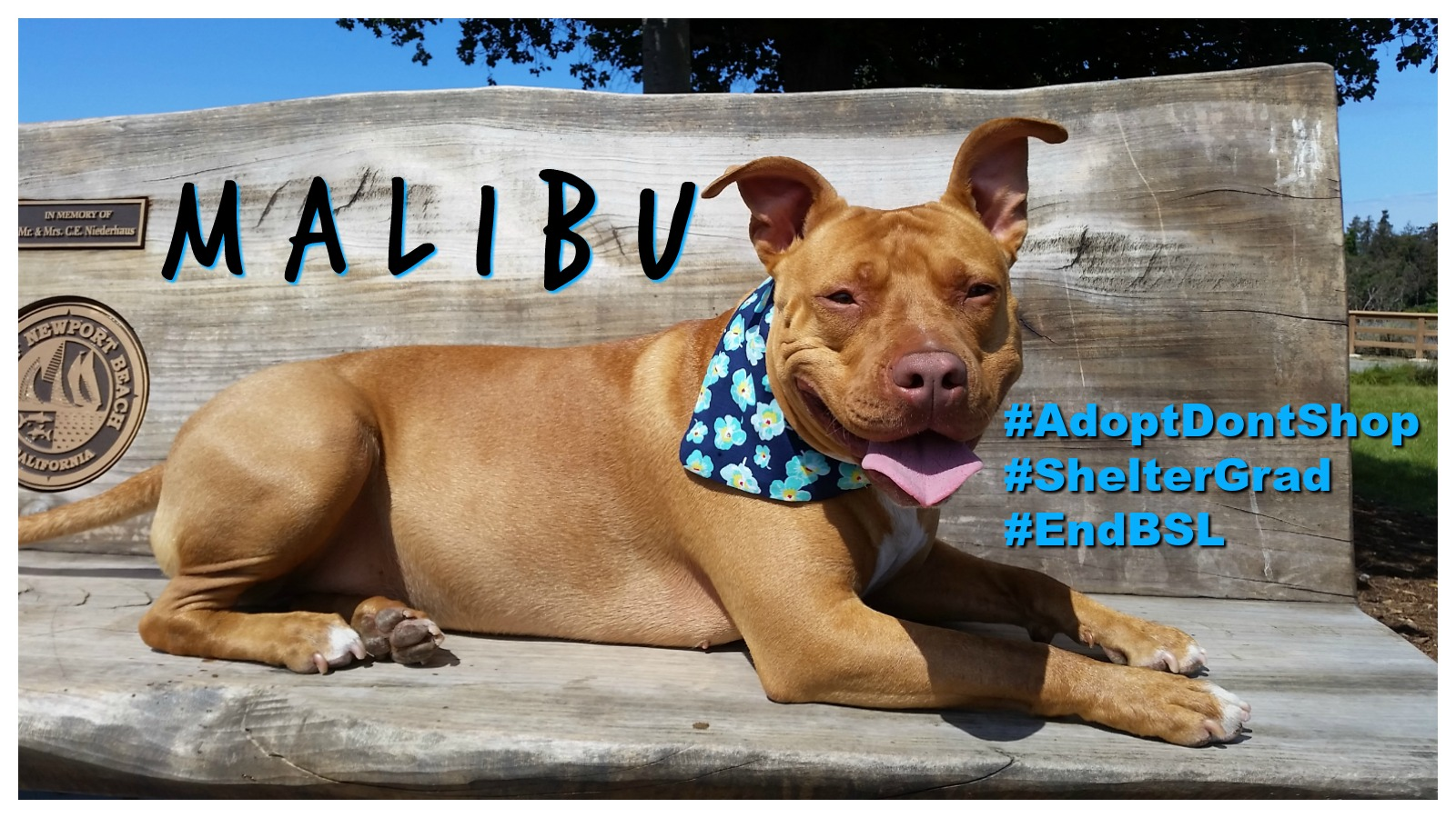 Malibu Featured
