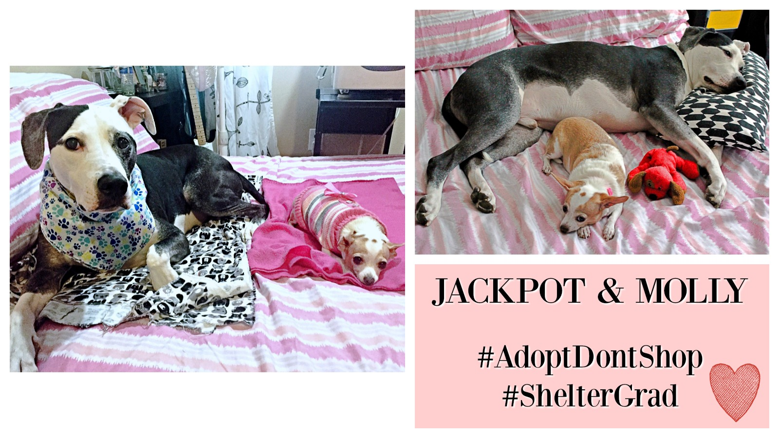 Jackpot and Molly Featured 2
