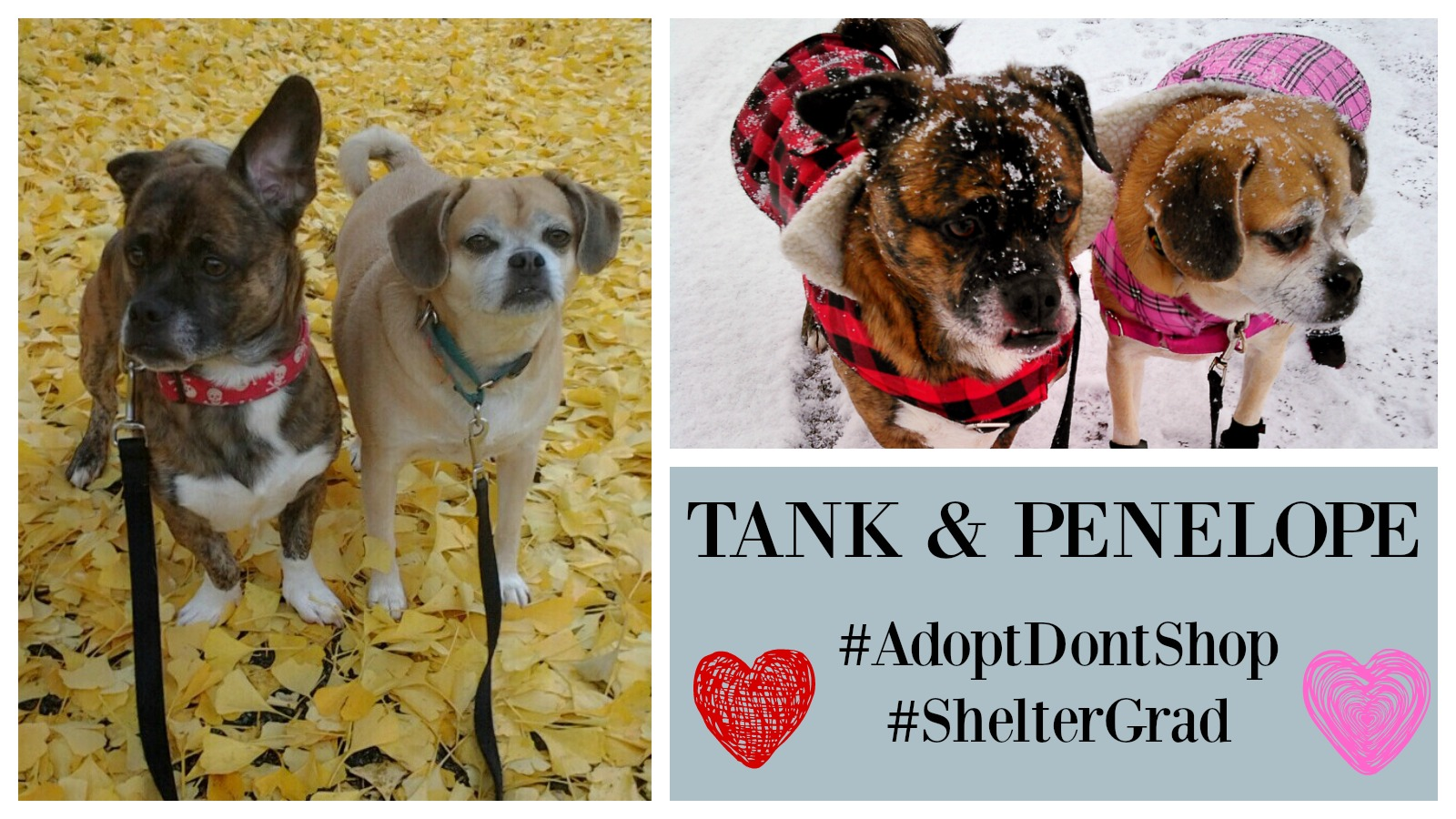 Tank and Penelope Featured