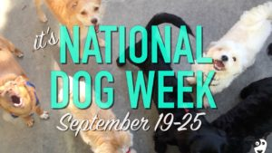 national dog week