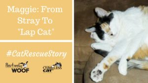 cat rescue story maggie