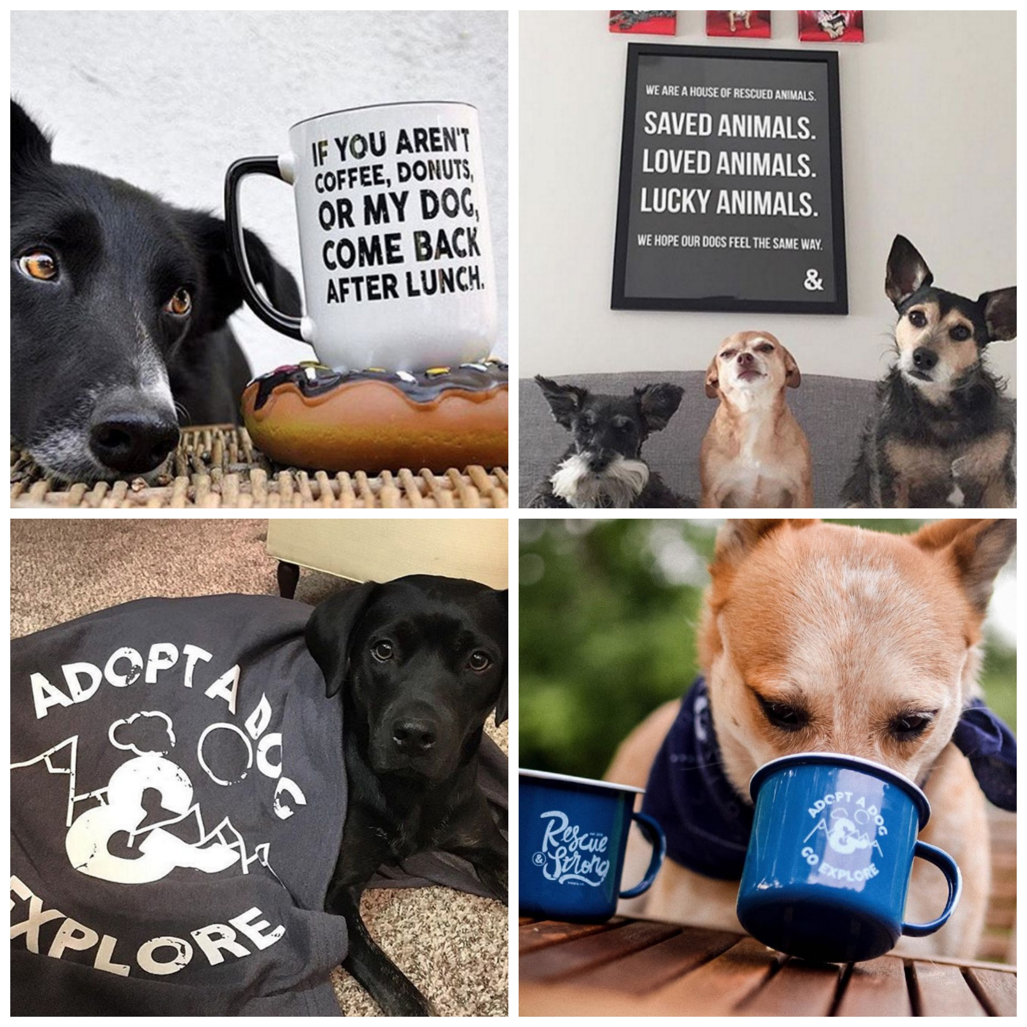 accessories-and-dogs