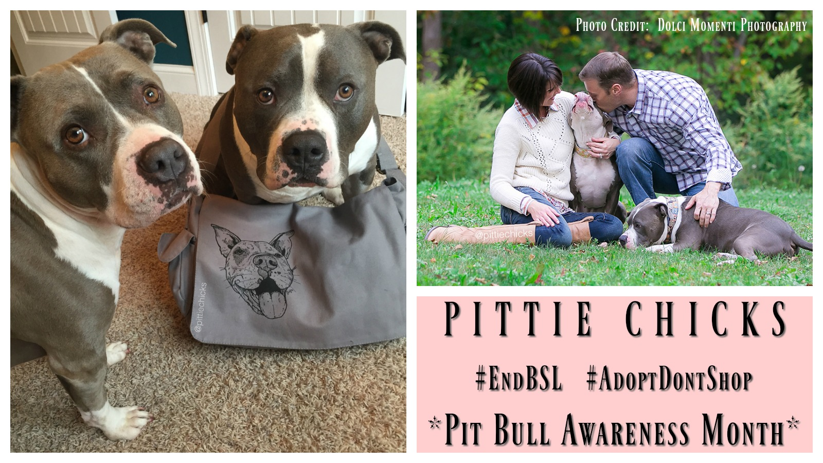 pittie-chicks-featured