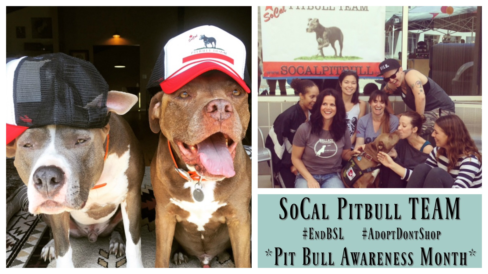 socal-pitbull-team-featured