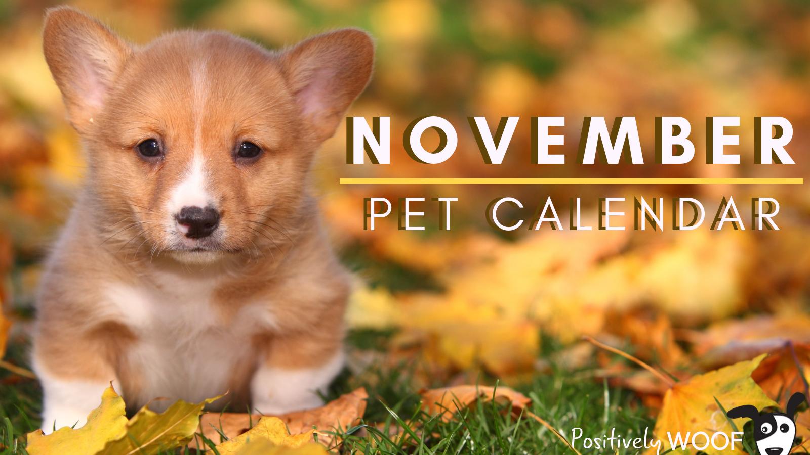 november pet calendar