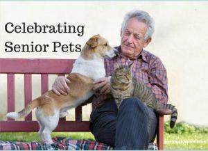 celebrating senior pets