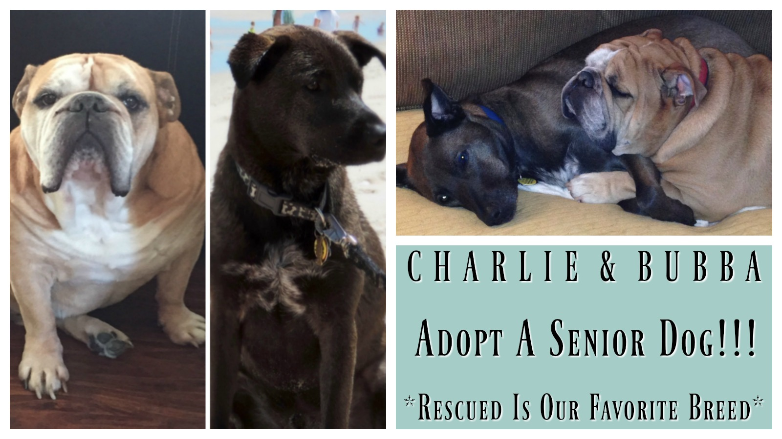 charlie-bubba-featured