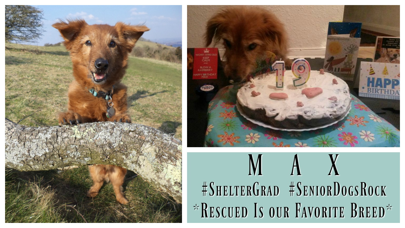 Dog Rescue Stories: Max the