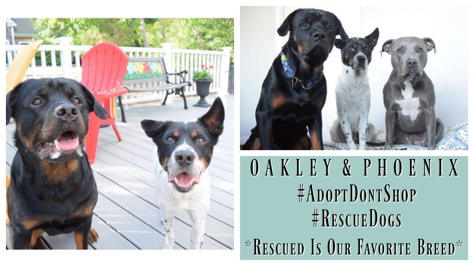 oakley-phoenix-featured
