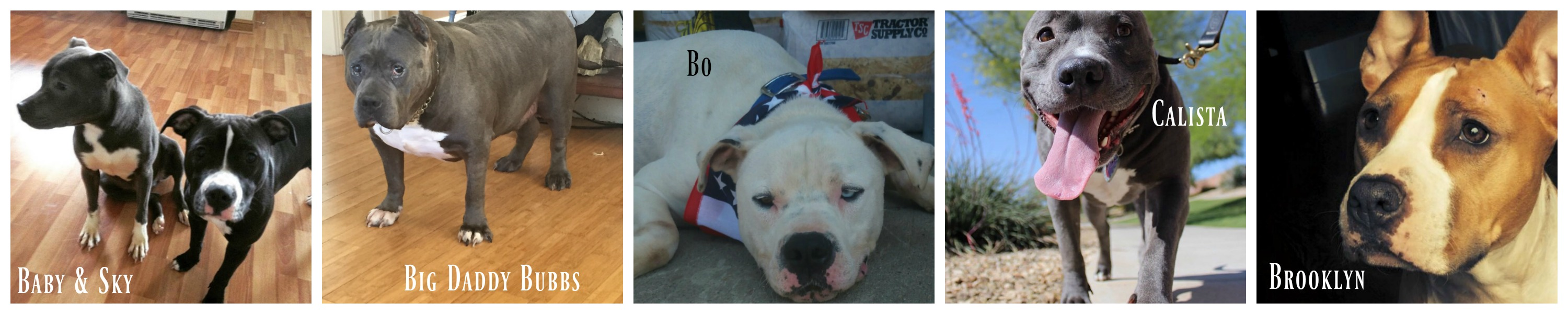 pbo-dogs-2