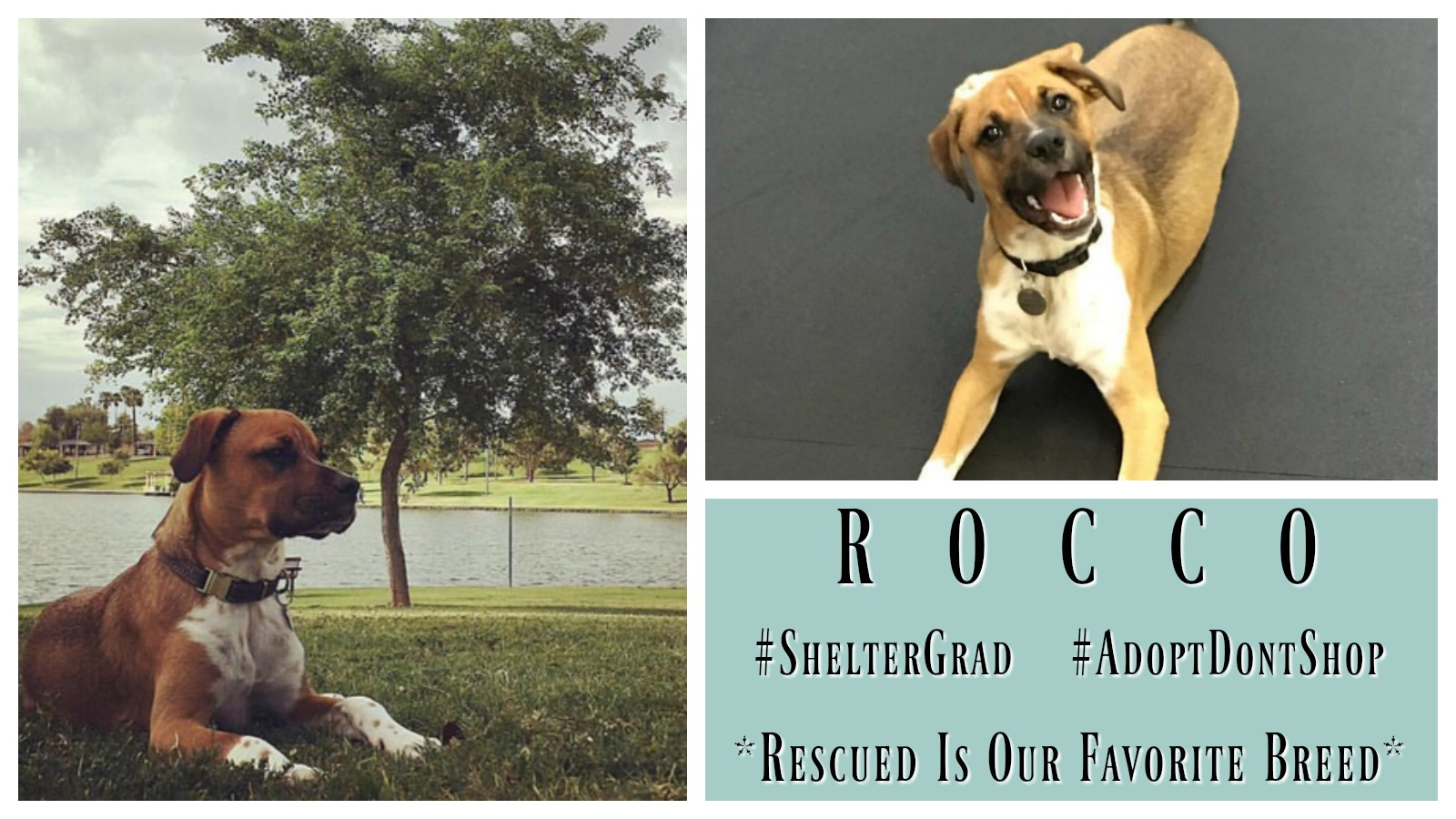 rocco-featured