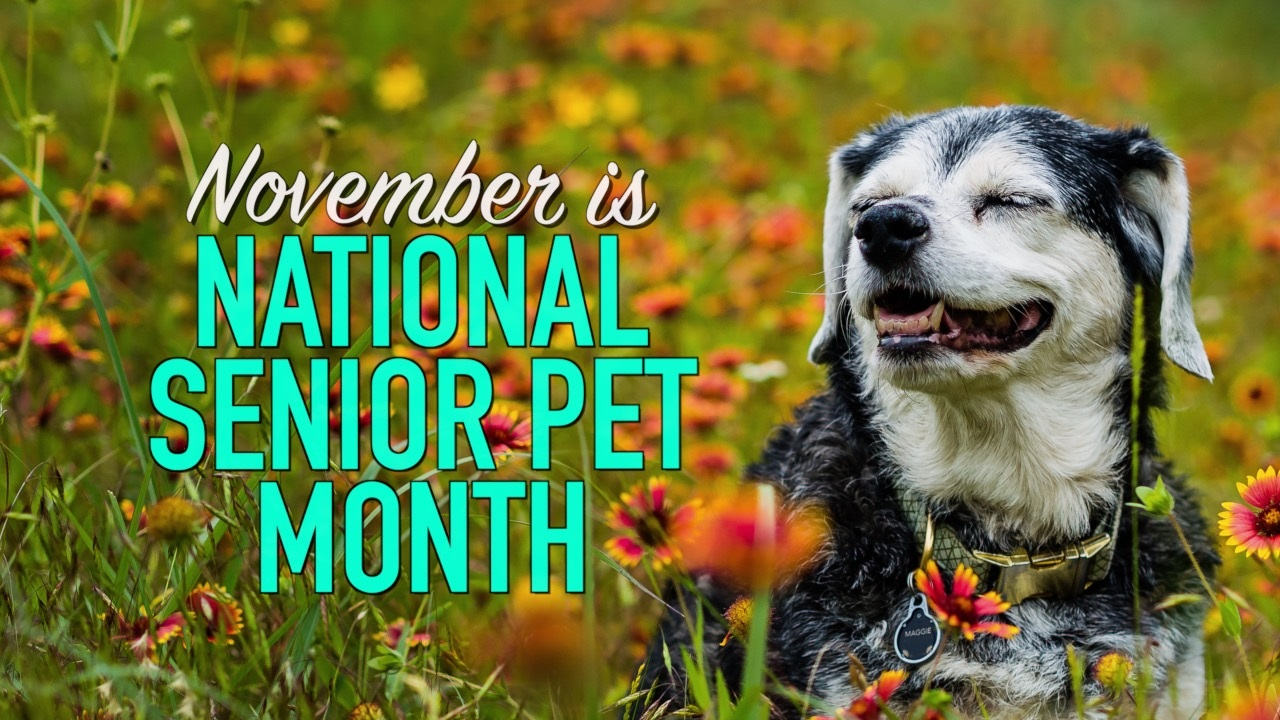 national senior pet month