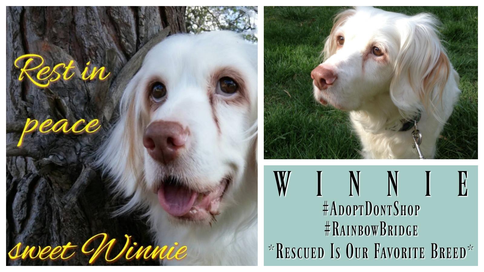 winnie-featured
