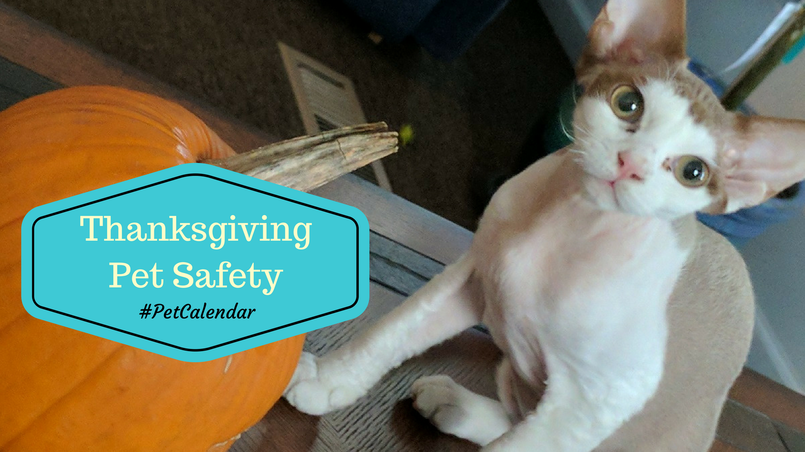 pet calendar thanksgiving pet safety