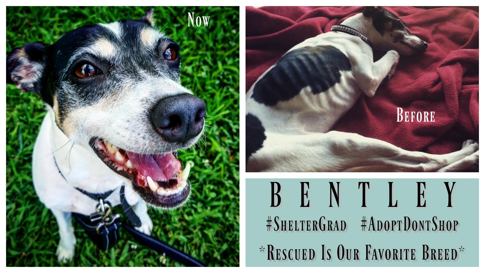 bentley-featured