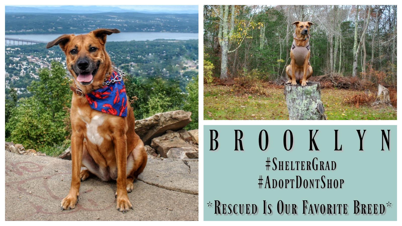 brooklyn-featured