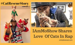 Cat Rescue Story I am Mo Show