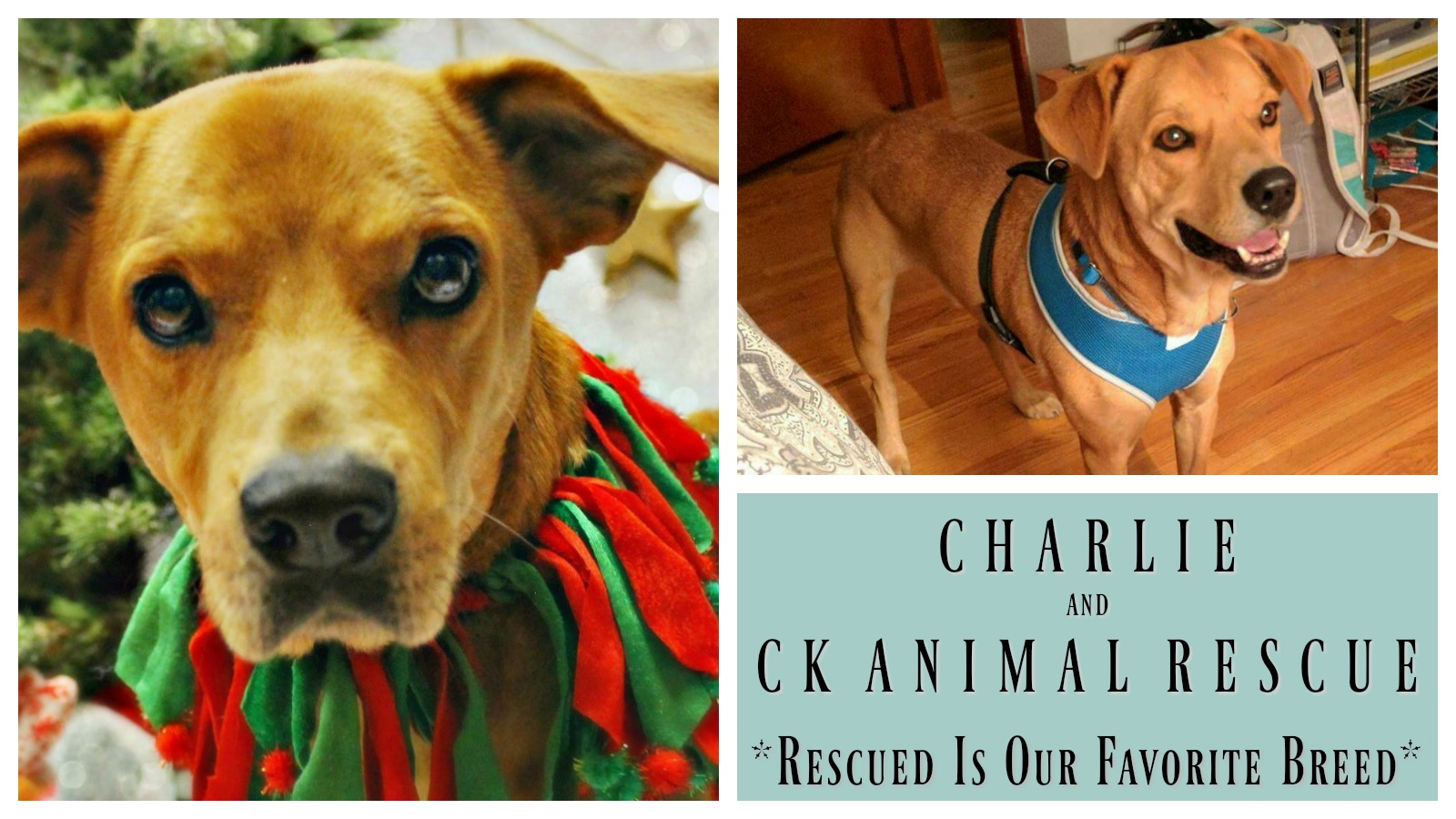 charlie-featured