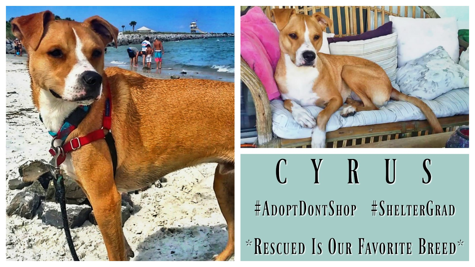 cyrus-featured