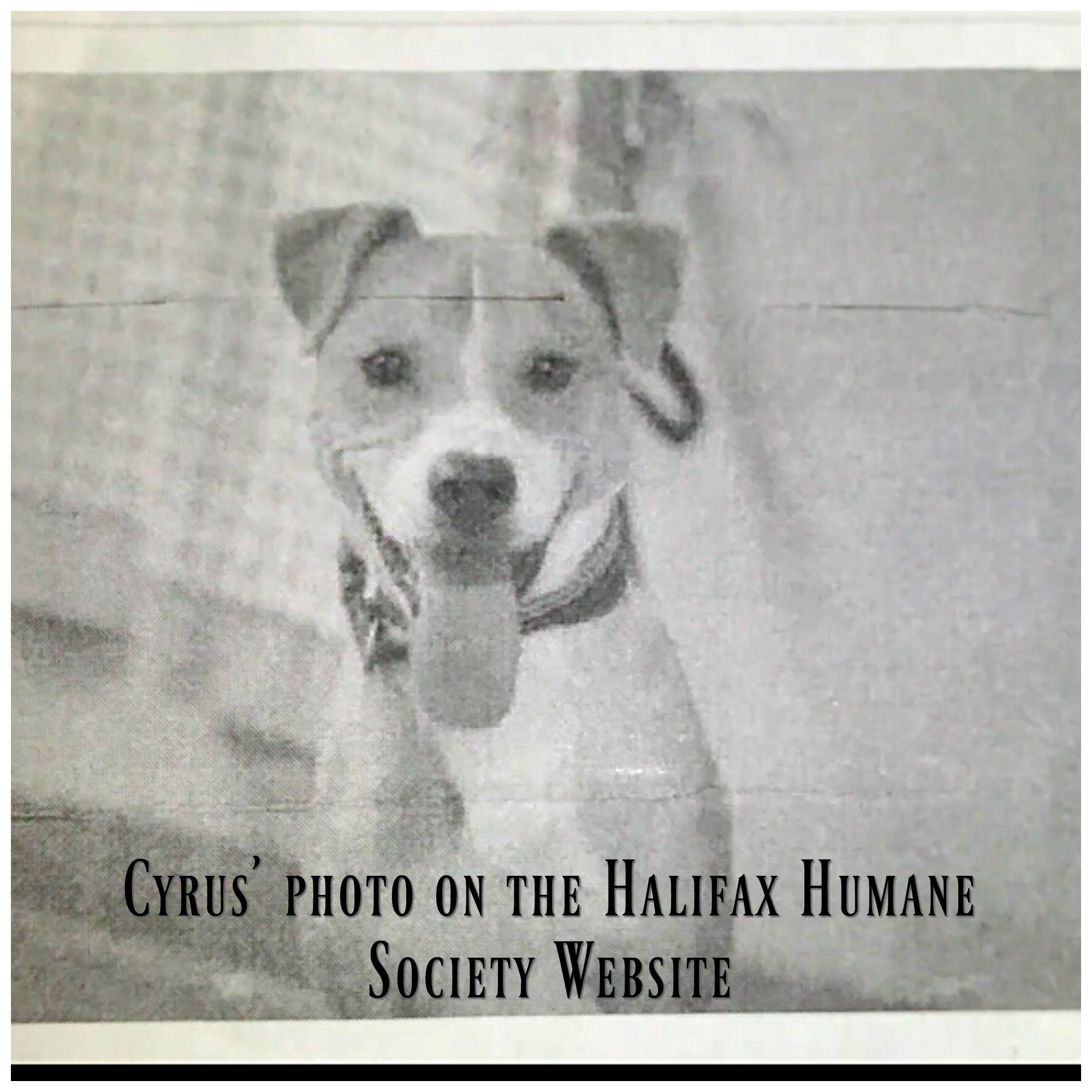 cyrus-website