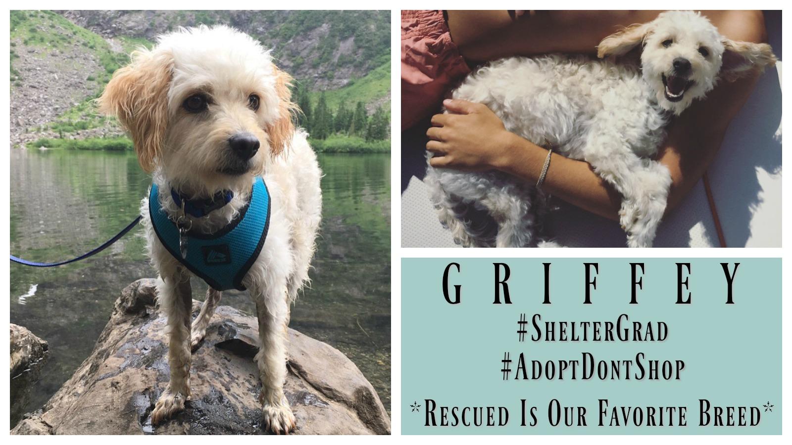 griffey-featured