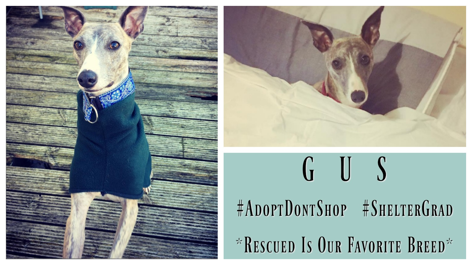 gus-featured