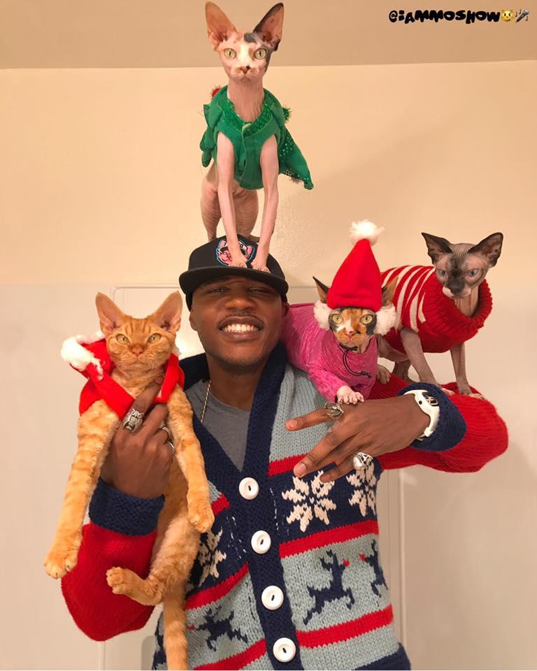 I am mo show cats
