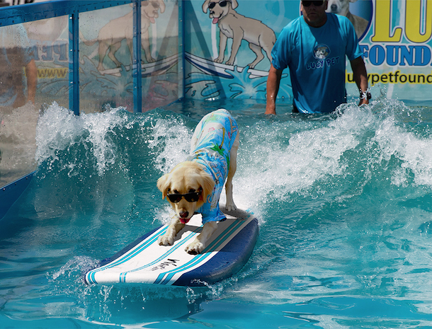 surfin-jack-lucy-pet