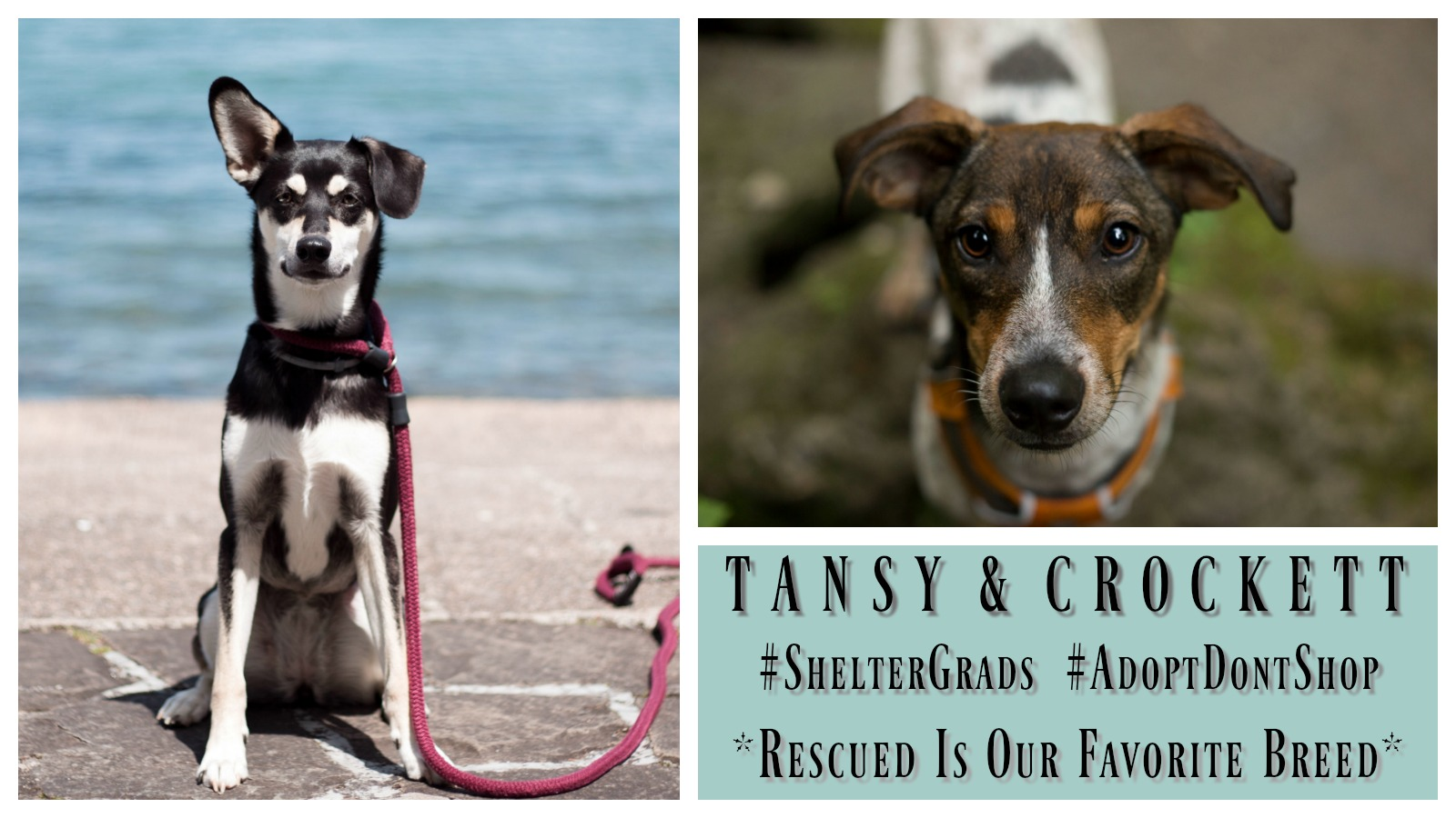 tansy-and-crockett-featured
